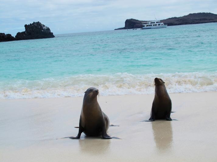 Galapagos_Robben